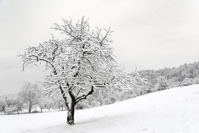 De fire årstider 1. del (vinter)