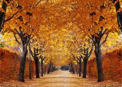 De fire årstider 3. del (Efterår)