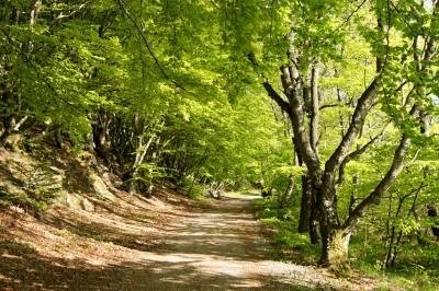 De fire årstider 4. del (Forår)